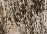 tronchi-bianchi-part5