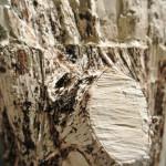 tronchi-bianchi-part6